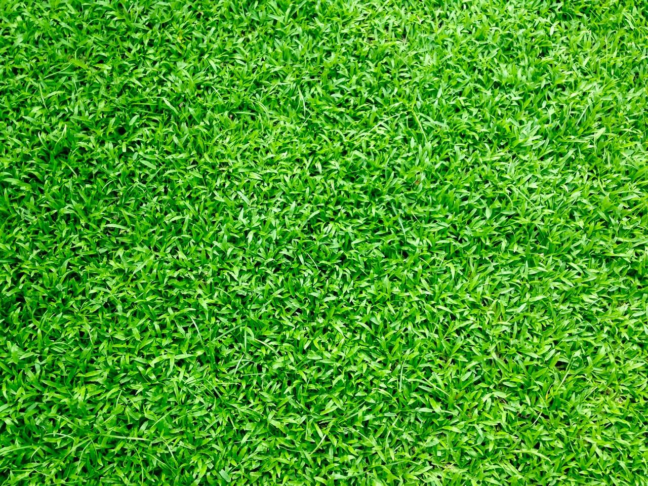 Dlaczego trawy ozdobne do ogrodu sprzedają się coraz lepiej