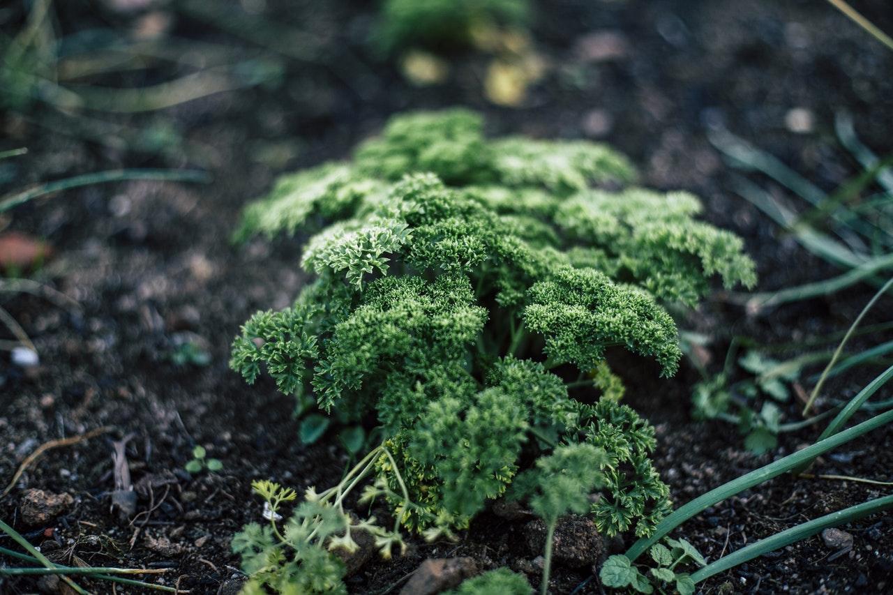 Własny ogródek warzywny – gdzie go zakładać