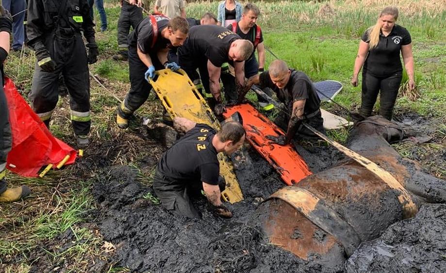 Strażacy ratowali konia [FOTO] | Remiza.pl – Polski Serwis Pożarniczy