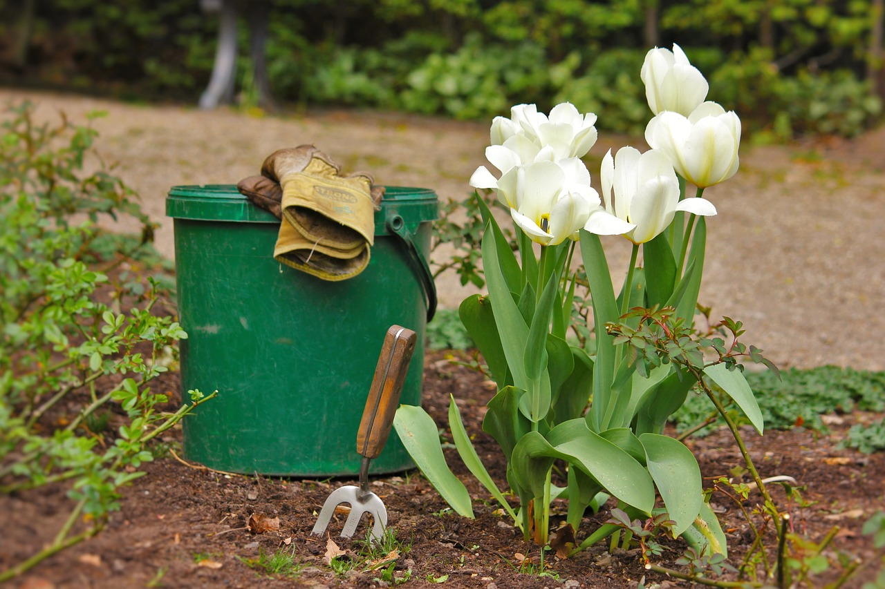 Jak samodzielnie zaprojektować wygląd ogrodu?