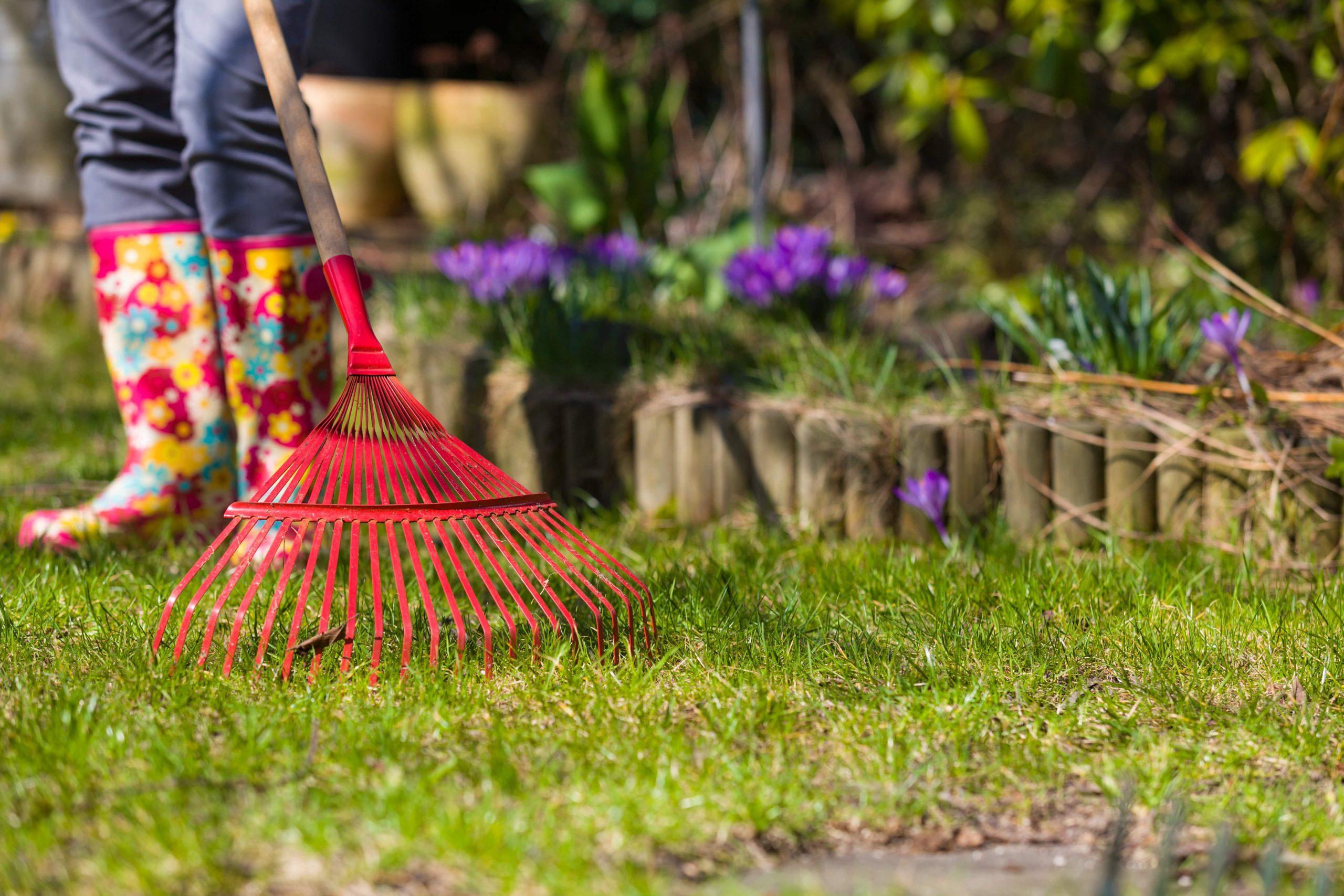 Pielęgnacja trawnika na wiosnę krok po kroku
