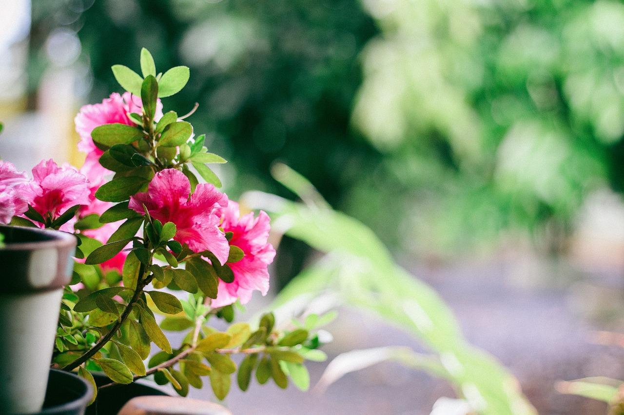 Jak wspomóc rośliny balkonowe i zapewnić im optymalne warunki rozwoju ?