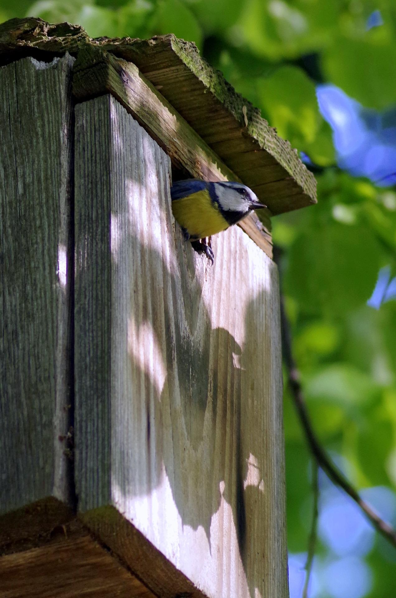 Czy w ogrodzie warto zawiesić budki lęgowe dla ptaków?