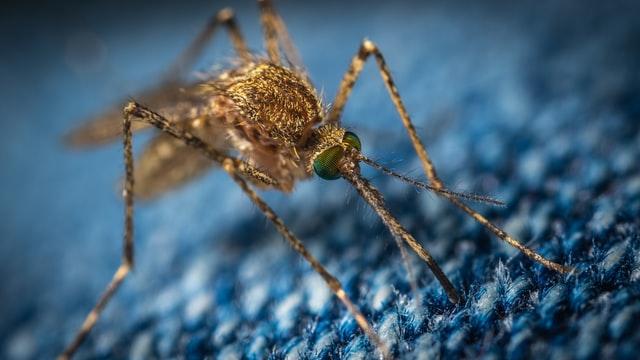 Jak pozbyć się komarów? Sprawdź 11 prostych sposobów na natrętne owady
