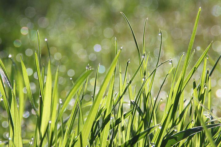 Jaka będzie najlepsza pompa do podlewania ogrodu?