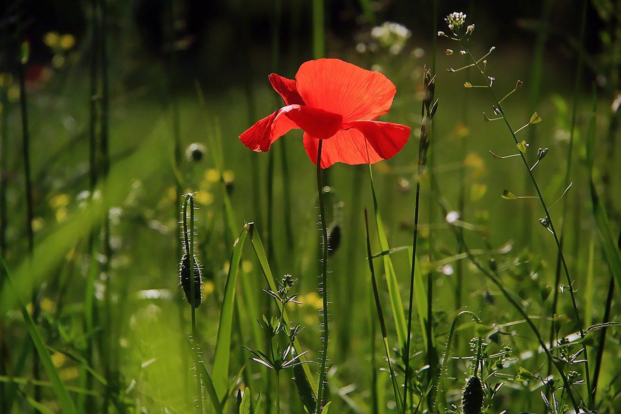 Jak prawidłowo dbać o ogród?